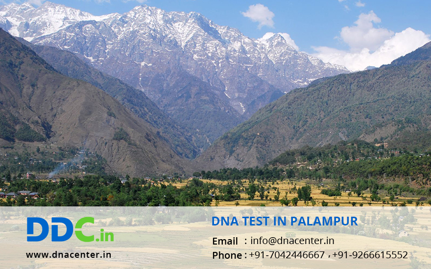 DNA Test in Palampur