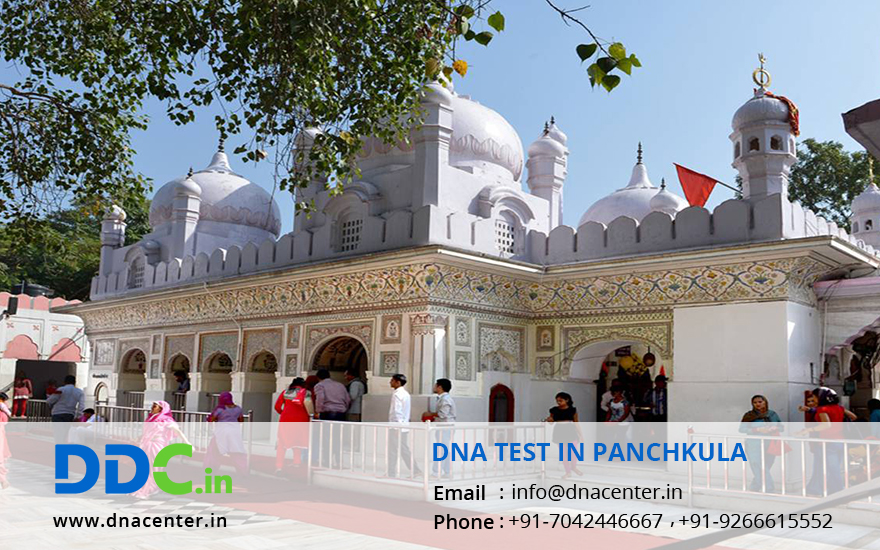DNA Test in Panchkula