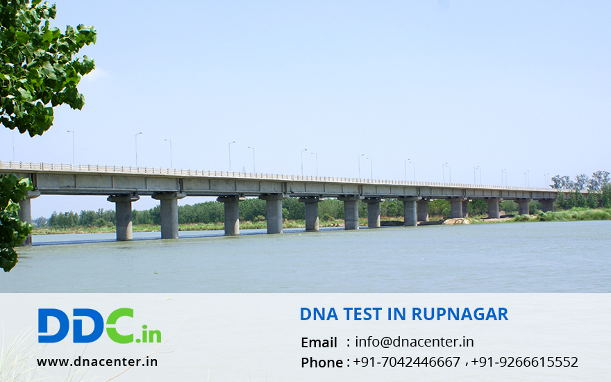 DNA Test in Rupnagar