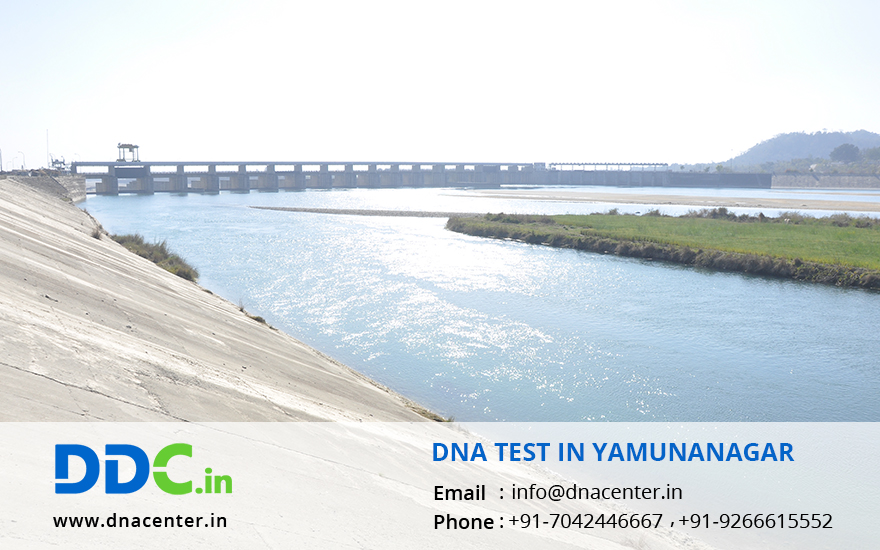 DNA Test in Yamunanagar