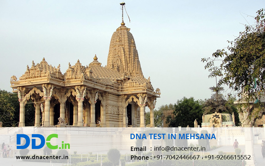 DNA Test in Mehsana