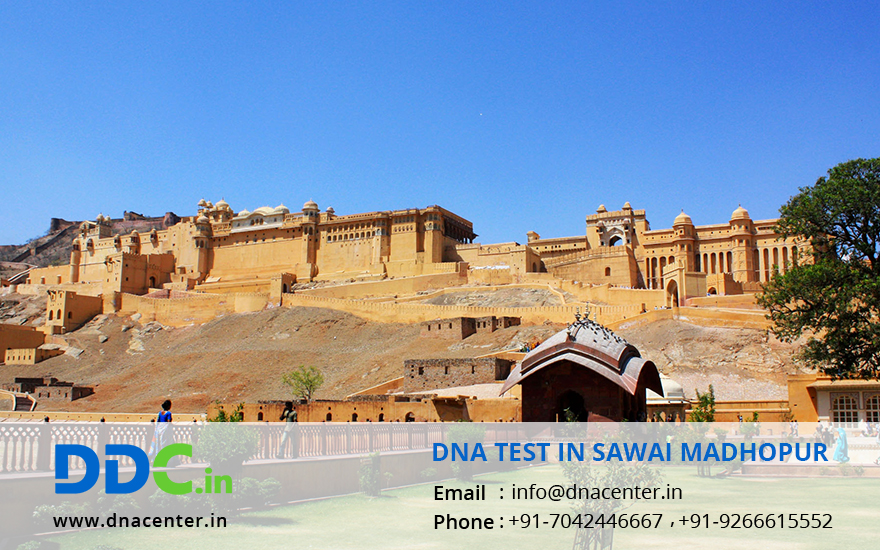 DNA Test in Sawai Madhopur