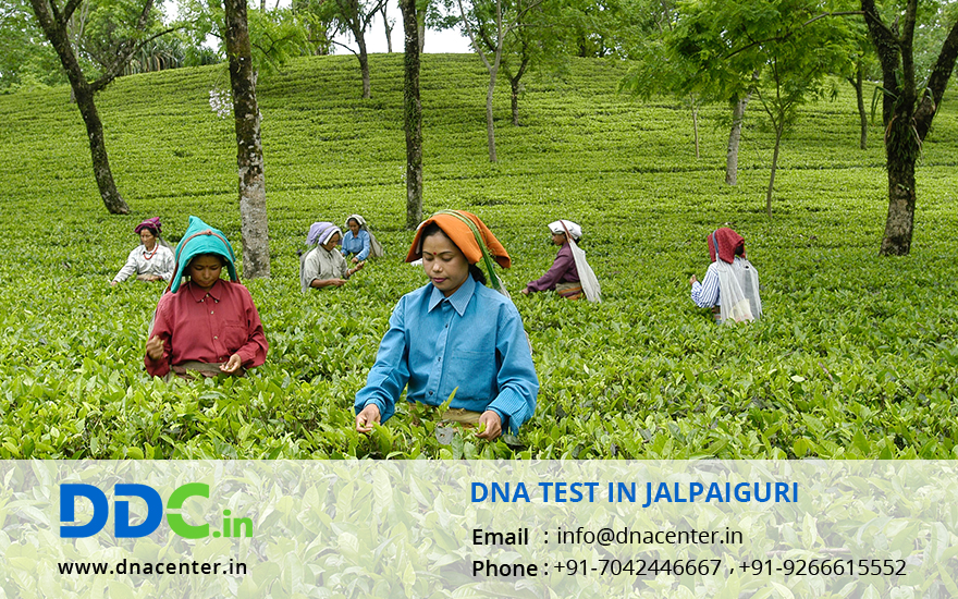 DNA Test in Jalpaiguri