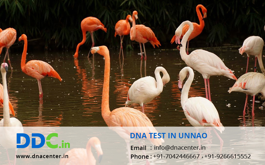 DNA Test in Unnao