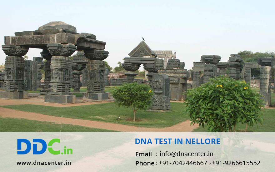 DNA Test in Nellore