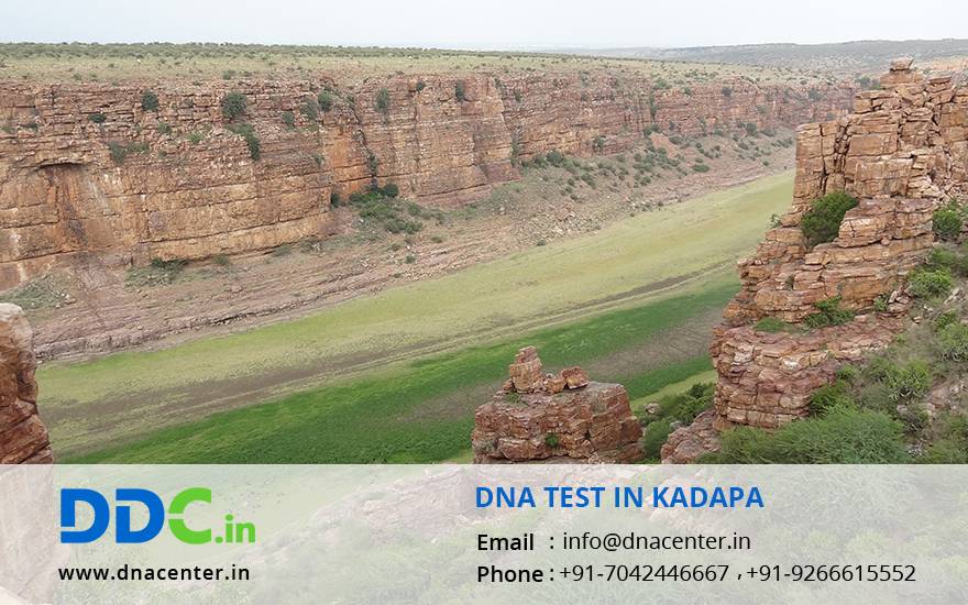 DNA Test in Kadapa