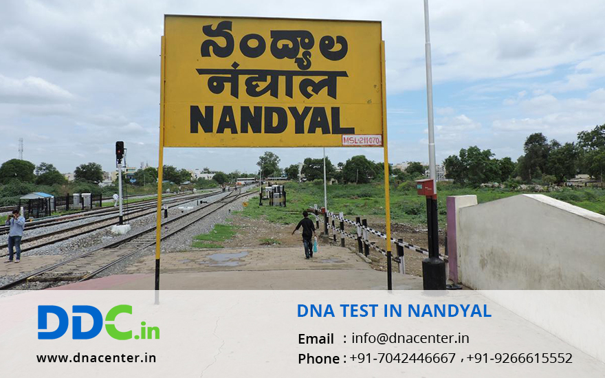DNA Test in Nandyal
