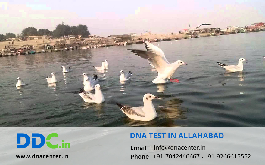DNA Test in Allahabad