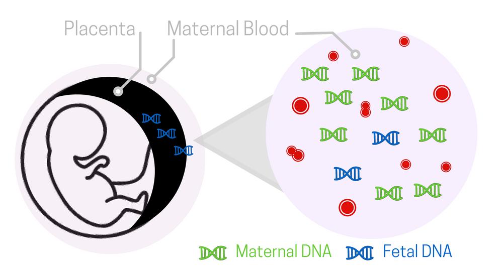 Prenatal Paternity Test
